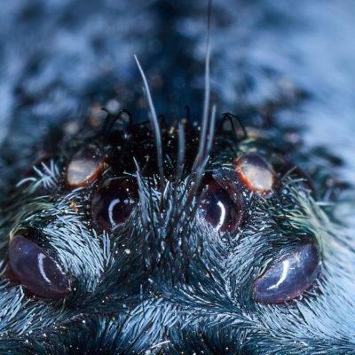 Nuovo foto album: Macrofotografia con ragni e scorpioni
