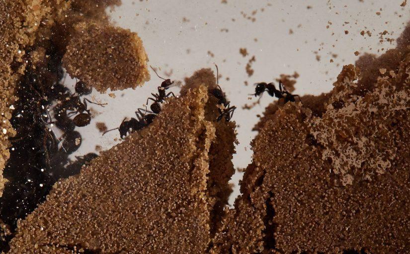 Kit formicaio domestico con formiche e regina